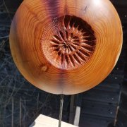 ammonite 25 cm if